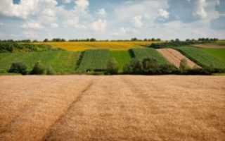 Как оформить земельный пай в собственность?