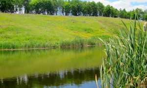 Земли водного фонда: понятие, состав и целевое назначение